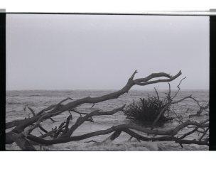 Driftwood009