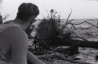 Driftwood010